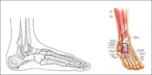 smerter fod